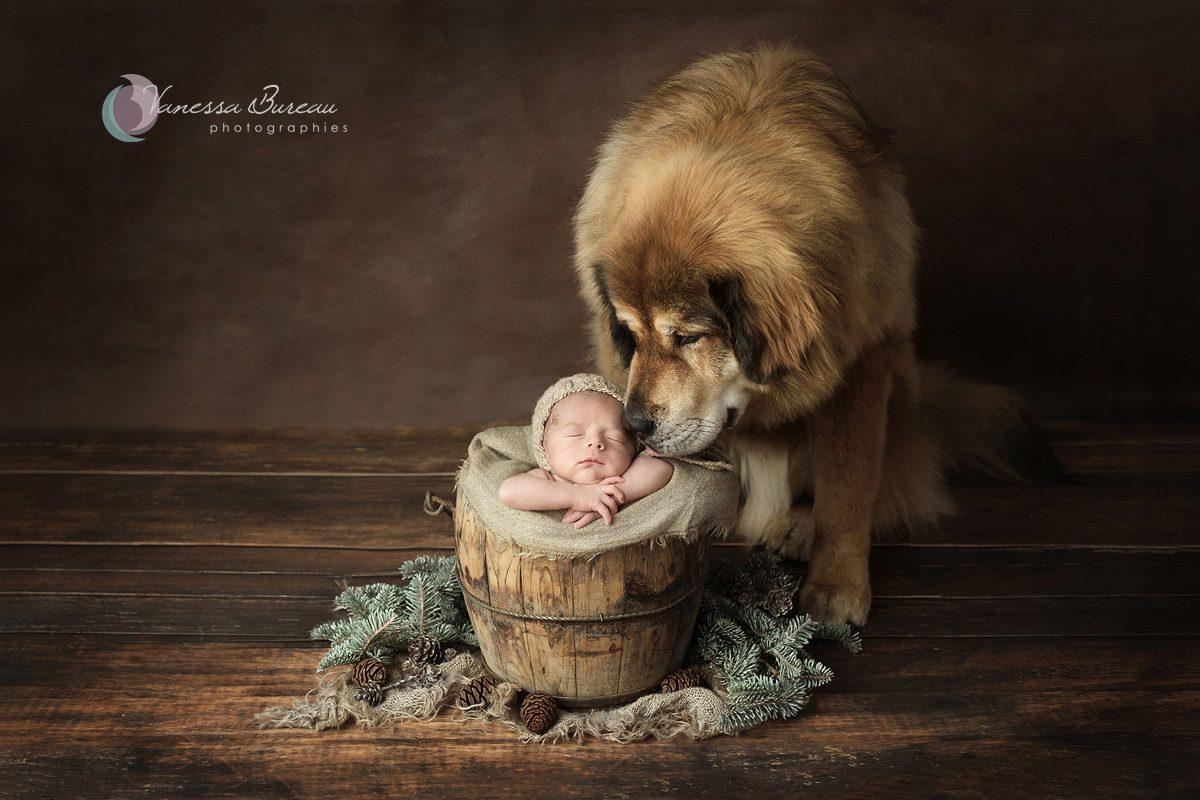 Nouveau-né avec son chien dans décor nature et bois